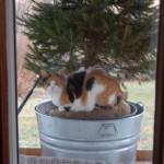 Cali kitty keeps company