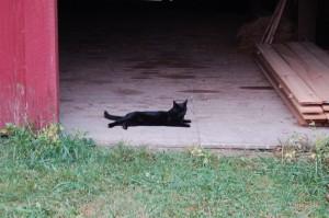 Liz lounging in the barn doorway, now that's a breezeway