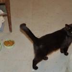 dry cat food again?